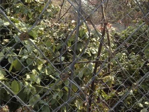 湖北黄石市白马公园防护网案例